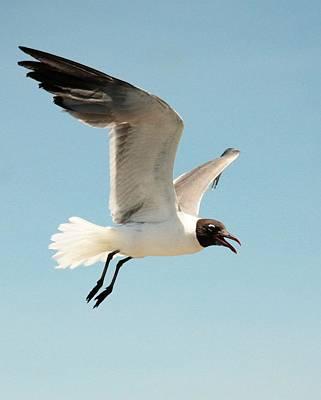 Modern Man Surf - Seagull in Flight by Noel Hankamer