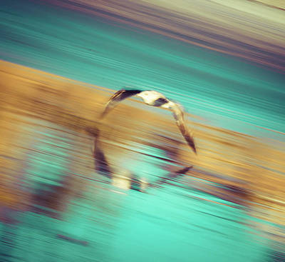 Photograph - Seagull In Motion by T Brian Jones