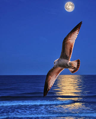 Seagull In The Moonlight Art Print