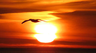 Photograph - Seagull In The Sunrise by Michel DesRoches