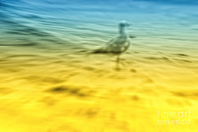 Abstract Seascape Digital Art - Seagull by Iris Greenwell
