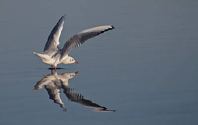 Bird Photograph - Seagull by Jan Boesen
