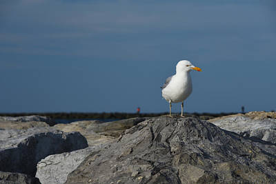 Photograph - Seagull by Jennifer Ancker