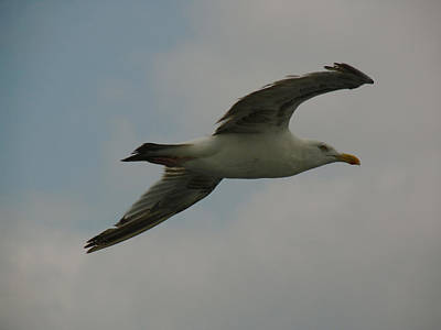 Chris Walter Rock N Roll - Seagull by Juergen Roth