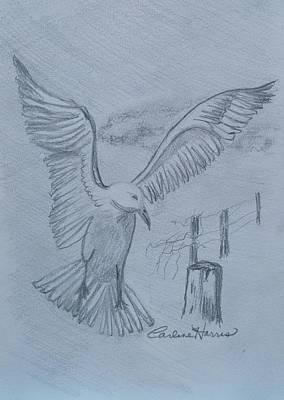 Seagull Landing Original