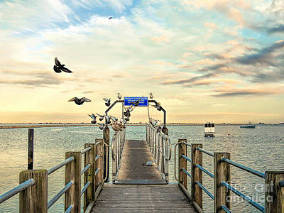 Photograph - Seagull Landing by Janice Drew