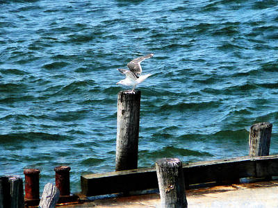 Photograph - Seagull Landing by Susan Savad