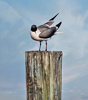 Photograph - Seagull - Laughing Gull On A Wooden Post by HH Photography of Florida