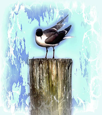 Photograph - Seagull - Laughing Gull Pop Art  by HH Photography of Florida