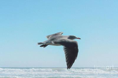 Digital Art - Seagull by Leah McPhail