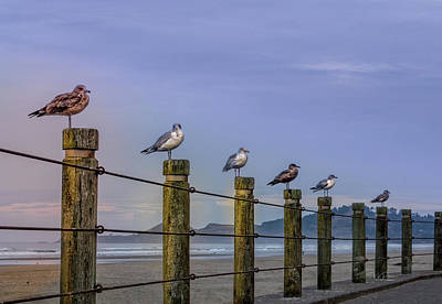 Photograph - Seagull Lineup by Bill Posner