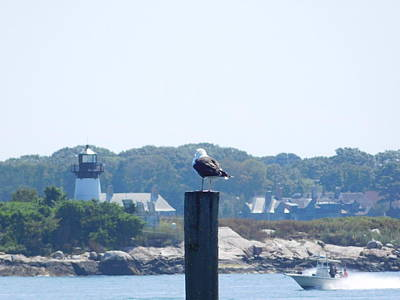 Photograph - Seagull Looking At Lighthouse by Catherine Gagne