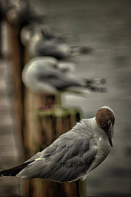 Flying Seagull Photograph - Seagull Lookout by Martin Newman