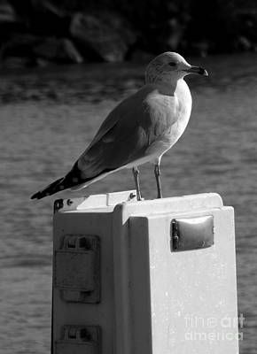 Photograph - Seagull Lookout by Sara Raber