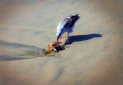Photograph - Seagull Lunch by Bonnie Follett