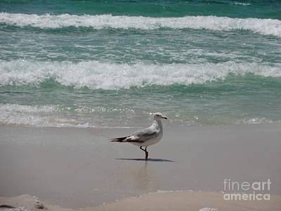 Ocean Photograph - Seagull by Megan Cohen