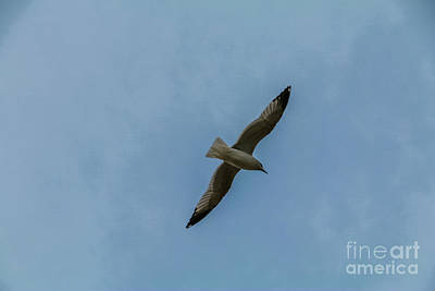 Photograph - Seagull by Mim White