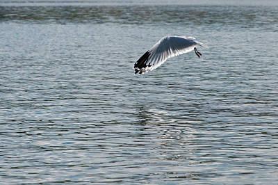 Photograph - Seagull Mistery by Pedro Cardona Llambias