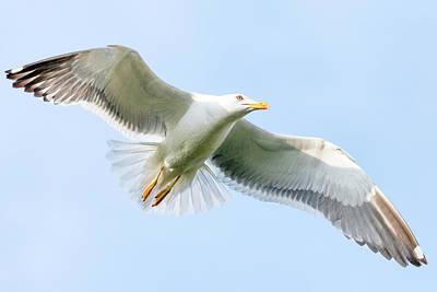 Photograph - Seagull by Nadia Sanowar