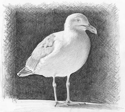Digital Art - Seagull by Nolan Clark