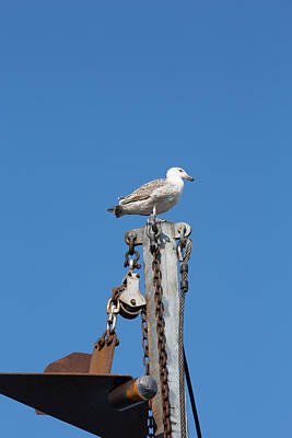 Photograph - Seagull On A Mast by Allan Morrison