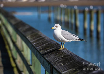 Photograph - Seagull On A Railing II by Gene Berkenbile