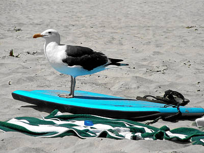 Seagull On A Surfboard Art Print by Christine Till