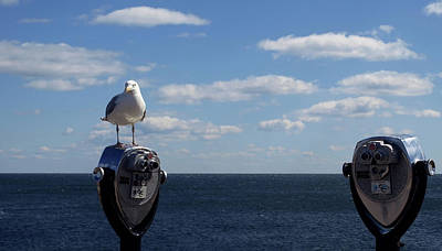 Photograph - Seagull On Binoculars by Mary Capriole