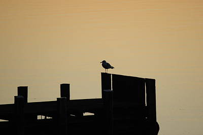 Photograph - Seagull On Dock by Ginger Wakem