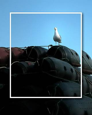Photograph - Seagull On Floats by Jerry Sodorff