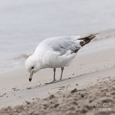Photograph - Seagull On Foggy Beach by Elena Elisseeva