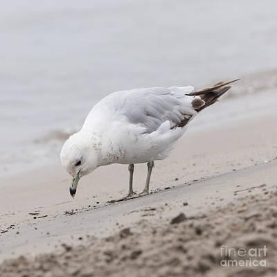 Seabirds Photograph - Seagull On Foggy Beach by Elena Elisseeva