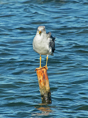 Photograph - Seagull Standing On Pole by Bob Slitzan