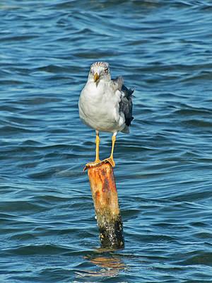Photograph - Seagull Standing On Pole by Bob Slitzan