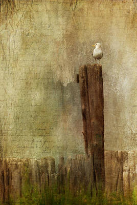 Painting - Seagull On Post by Christina VanGinkel