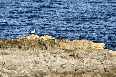 Photograph - Seagull On Sea Rock by Dimitar Hristov