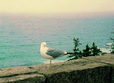 Photograph - Seagull On Stone Wall by Desiree Paquette