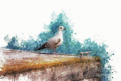 Lake Michigan Digital Art - Seagull On The Pier by Mary Machare