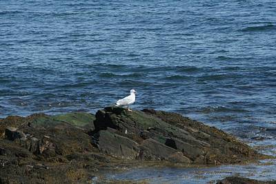 Art Print featuring the digital art Seagull On The Rocks by Barbara S Nickerson