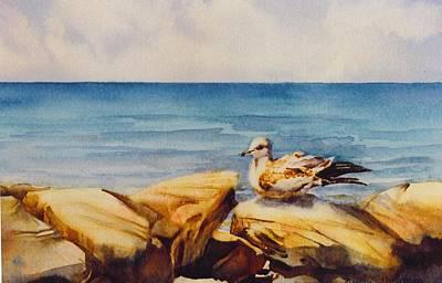 Seagull-on-the-rocks Art Print by Nancy Newman