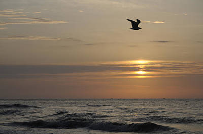 Seagull Over Atlantic Ocean At Sunrise Art Print by Darrell Young