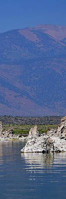 Photograph - Seagull Over Mono Lake by Sandra Lynn