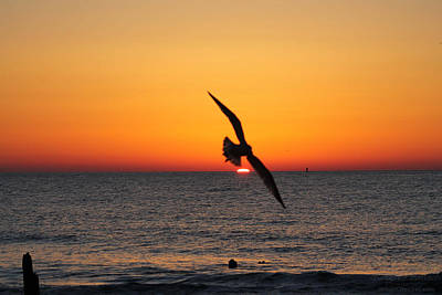 Photograph - Seagull Over Sunrise by Robert Banach