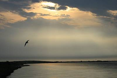 Photograph - Seagull Over The Fire Island Inlet by Christopher Kirby