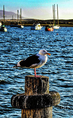 Seagull Perch Art Print