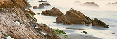 Gaviota Photograph - Seagull Perching On The Beach, Gaviota by Panoramic Images