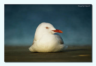 Digital Art - Seagull Portrait 0021 by Kevin Chippindall