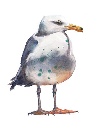 Avian Painting - Seagull Print by Alison Fennell