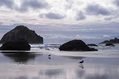 Seagull Reflections Art Print