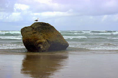 Photograph - Seagull Rock by Joseph Skompski
